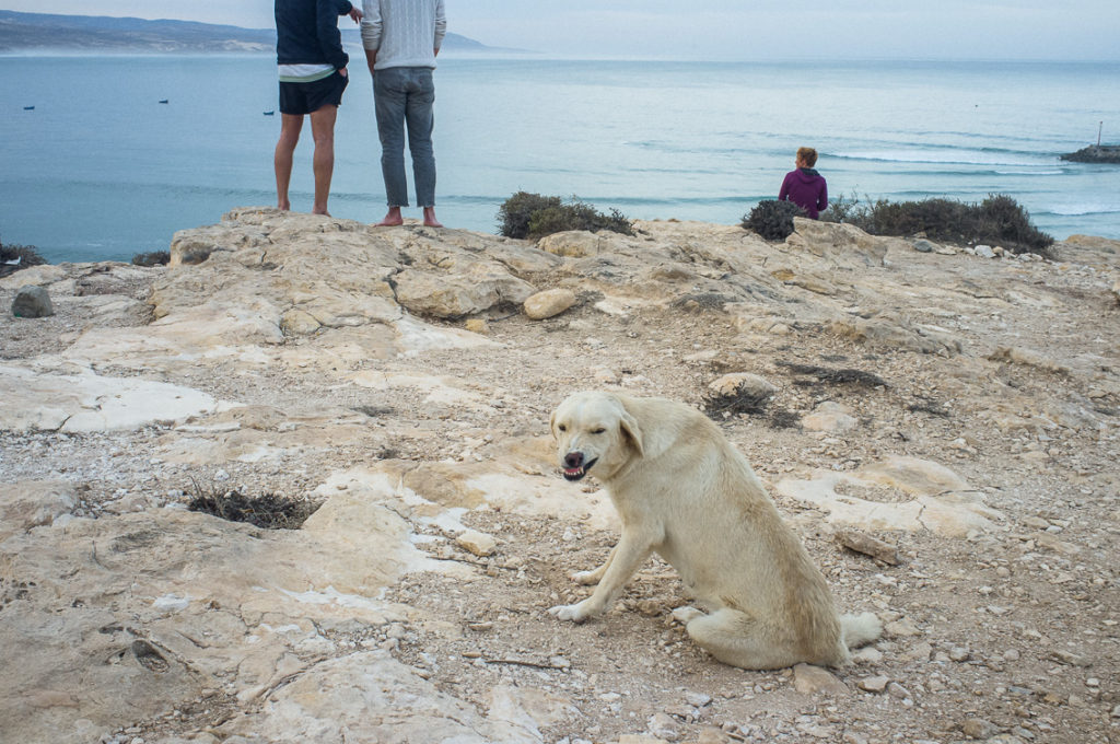 An angy dog protecting the surf spot of Imsouane